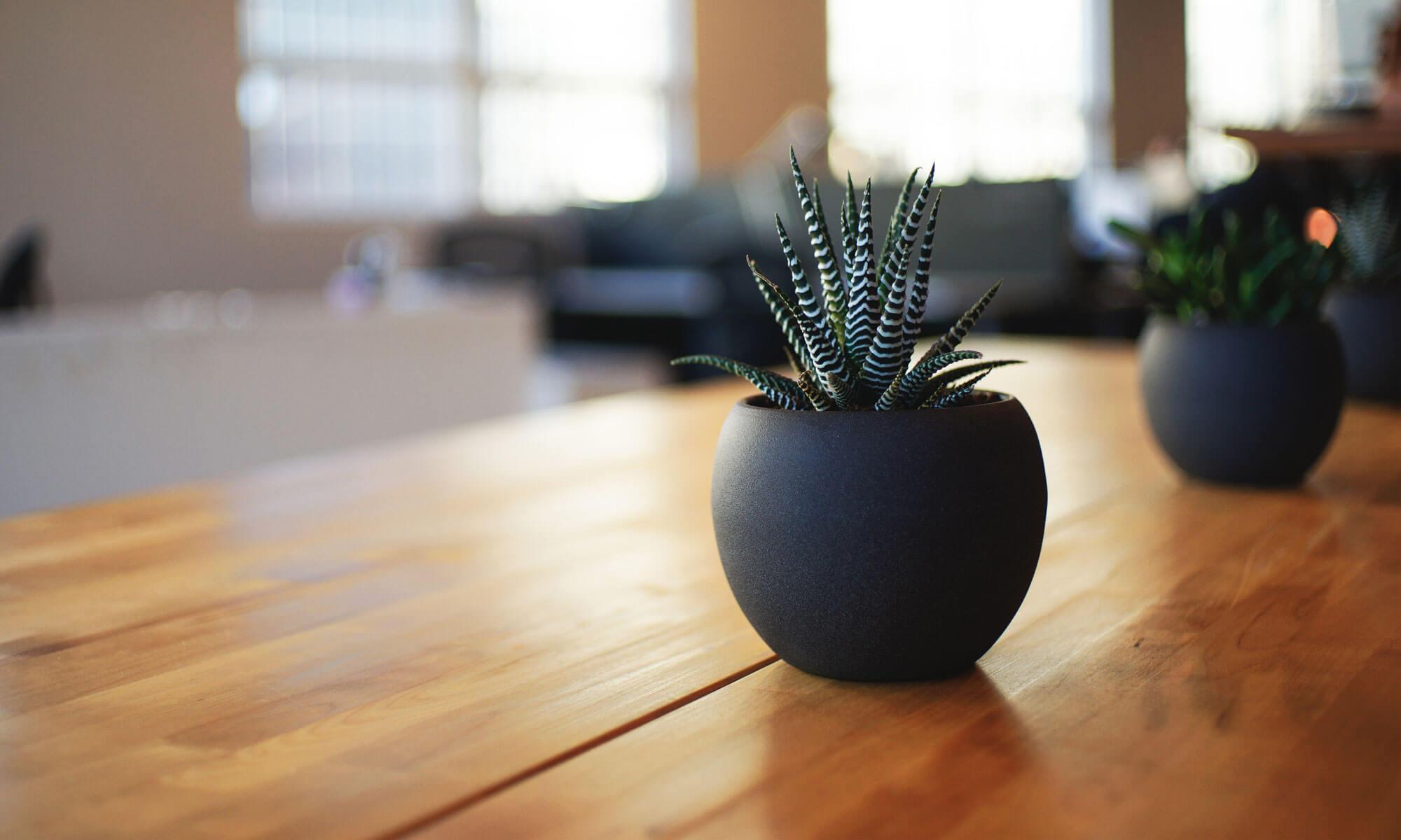 日本DEXE頭髮增長液專賣店